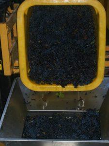 egrappage-vins-koenig-1